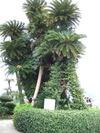 2009_0328_10